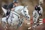 Pferde-Collage Cornado NRW mit Markus Ehning