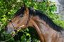 Equestfoto Pferde Fotoshooting