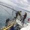 tauchen mit Tunfischen